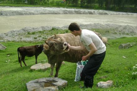 Коровьи нежности